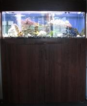 Авкариум 400 л. с рыбками и всем остальным