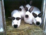 Кролики !!!