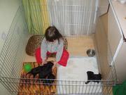 Клетка-загон для содержания щенков или котят 100х100хh60 см