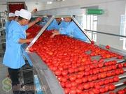 Рабочие на овоще фабрику. Испания.