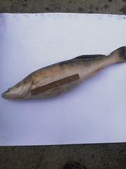 Свіжа річкова риба. Карась,  густера,  синець,  плотва,  лящ і ін.