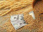 Куплю ячмень, пшеницу. Закупка зерновых.